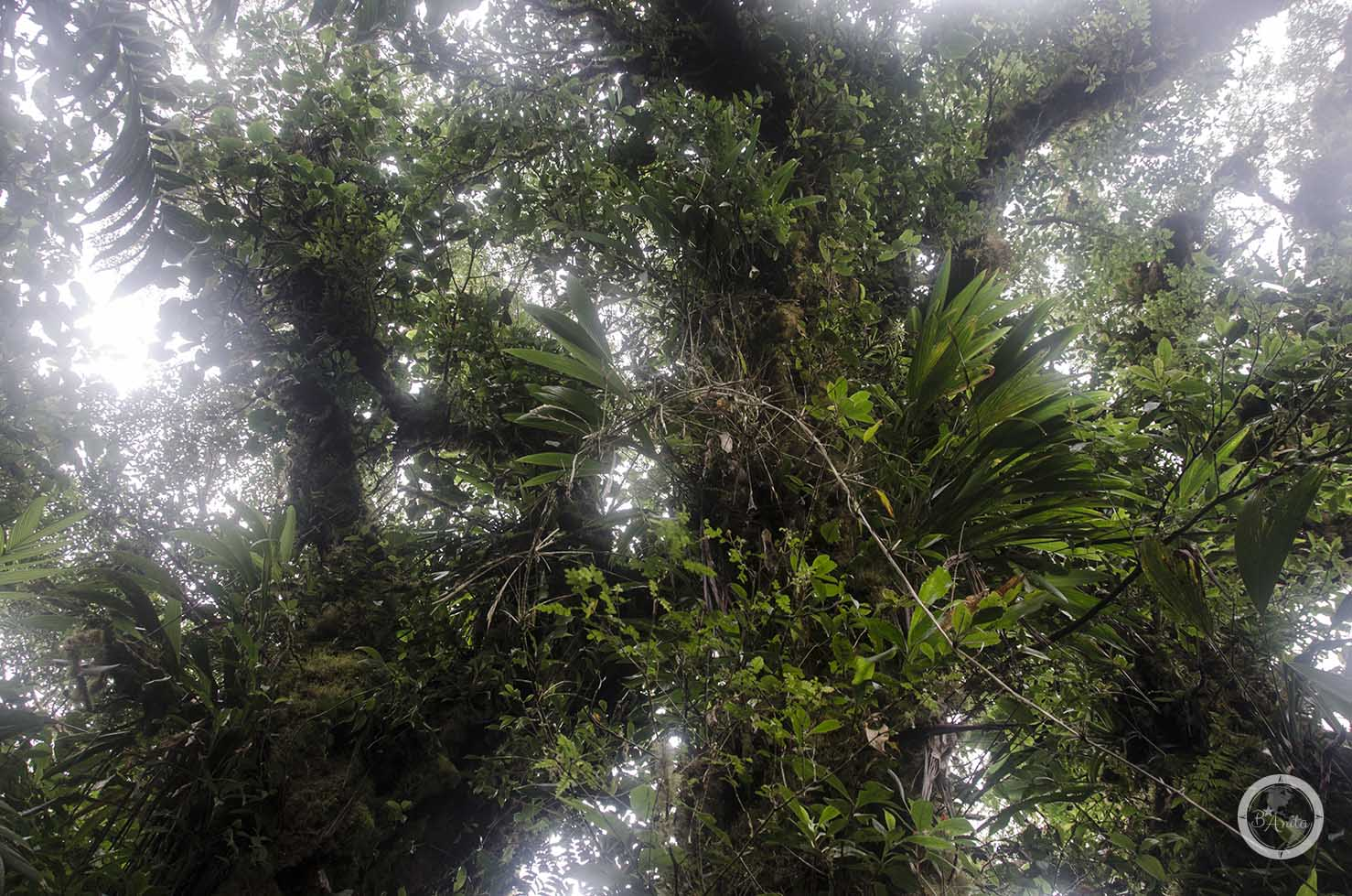 Monteverde Kostaryka