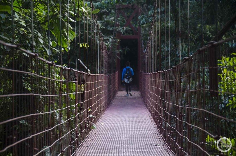 Słynny most w Rezerwacie Monteverdde