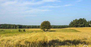 Polska wschodnia -łaka