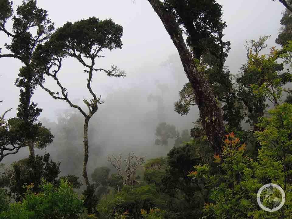Mgła wParku Narodowym Chirripo