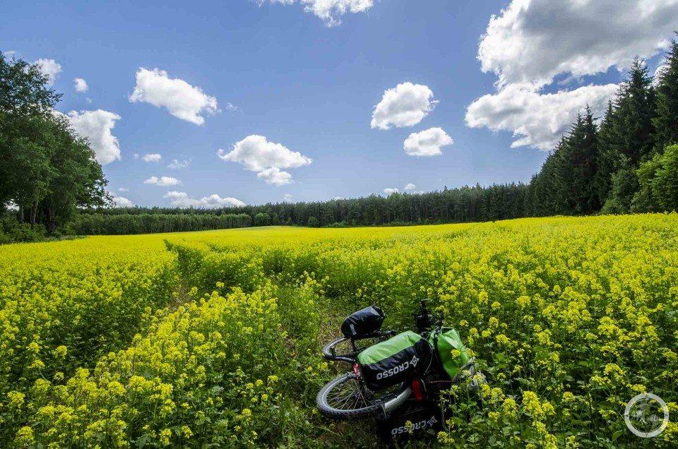 Zolto zielono rowerowo