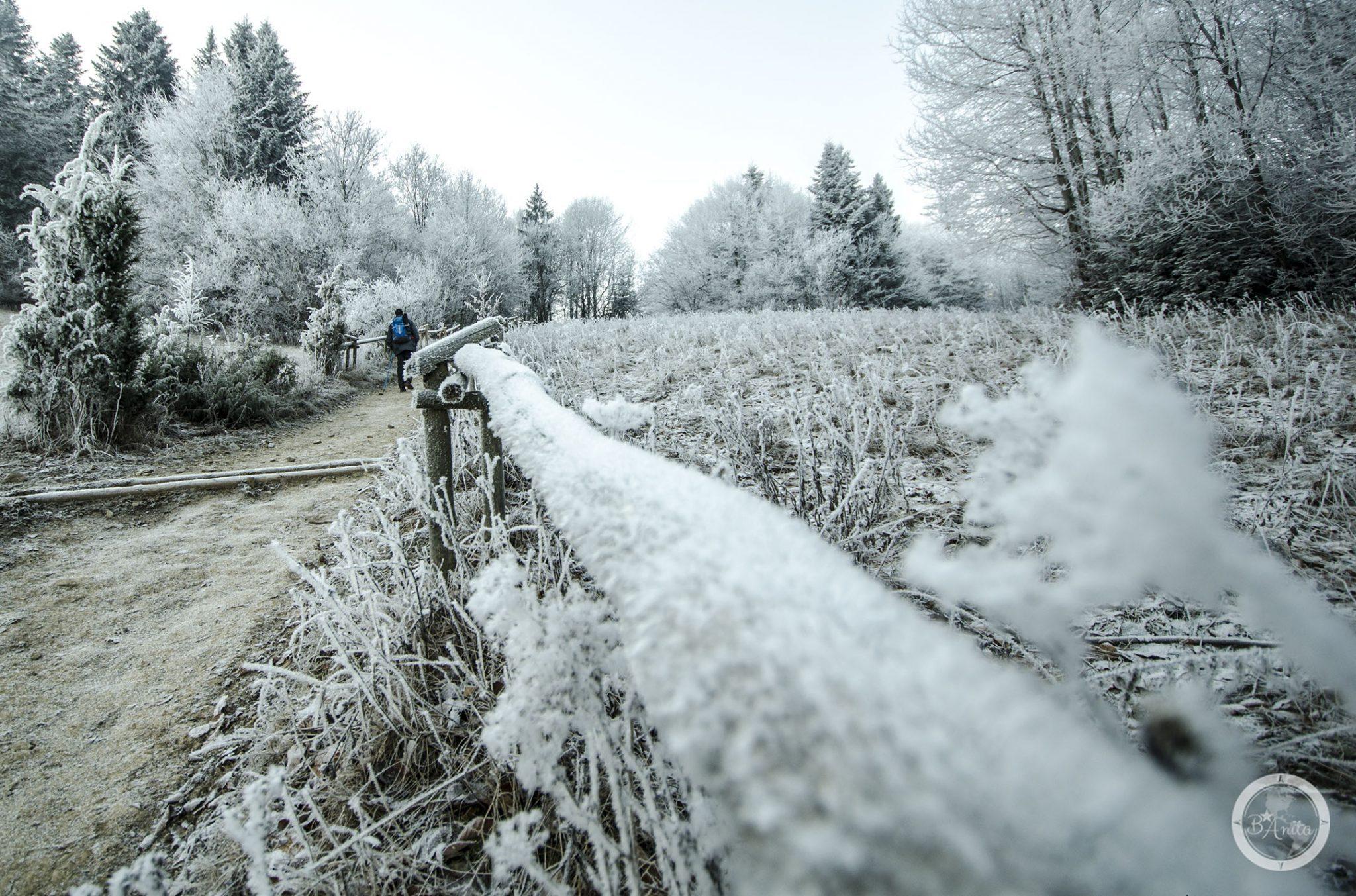 Turysta zbłękitnym plecakiem naSzalku wPienińskim Parku Narodowym. Wokoło oszronione drzewa