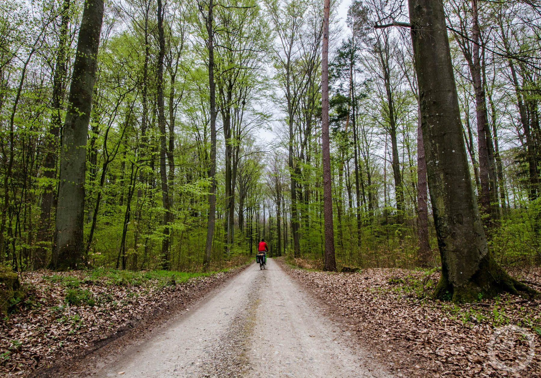 Przez las wwarmińsko-mazurskim