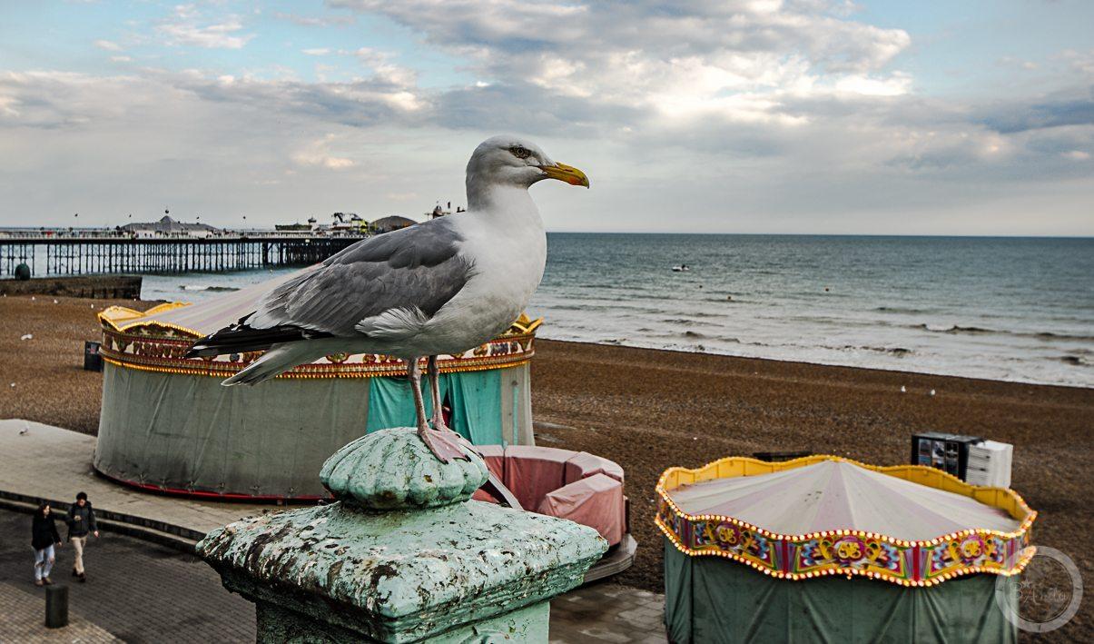 Brighton Coast (5)