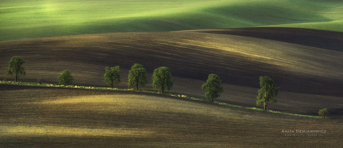 Morawy Południowe, Aleja Kasztanowa