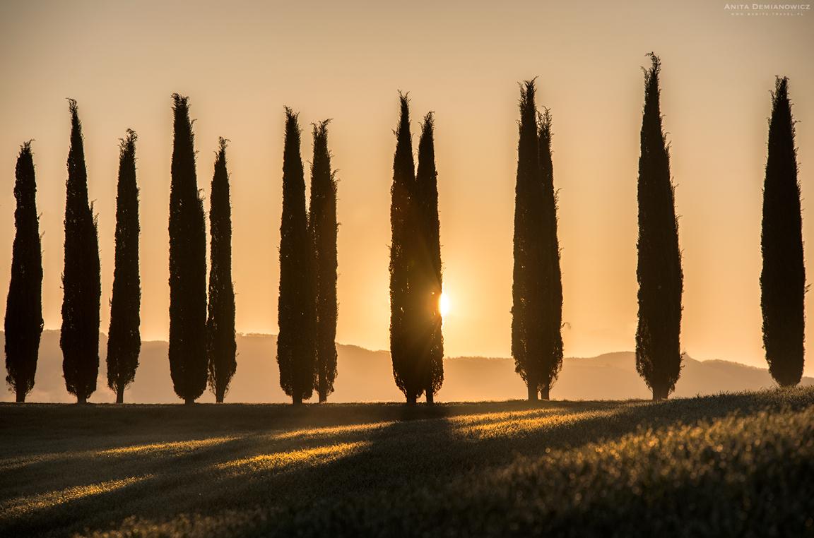 Alejka cyprysowa Bagno Vignoni