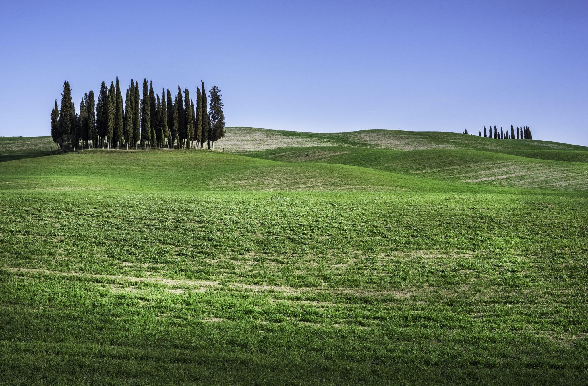 Kępka Cyprysów przydrodze doMontalcino, Toskania, Tuscany, Włochy