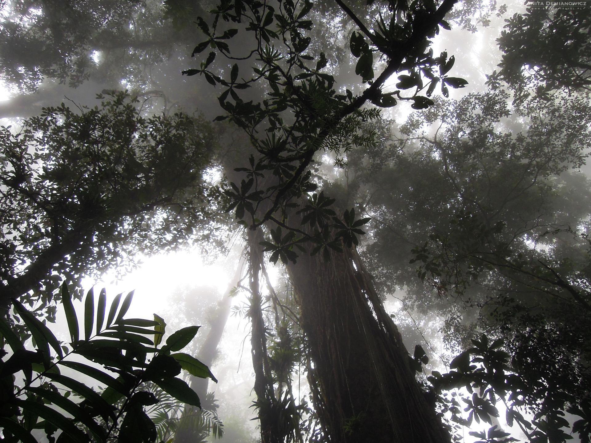Kostaryka, Corcovado